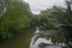Кокосовая пальма около реки Стоковые Изображения RF