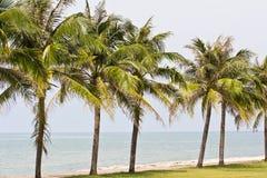 Кокосовая пальма Стоковые Фотографии RF