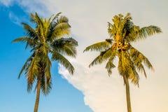 2 кокосовой пальмы и голубого небо Стоковое Изображение RF