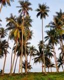Кокосовые пальмы около пляжа Стоковые Фото