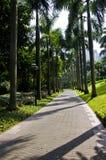 Кокосовые пальмы лета в парке Стоковое Изображение