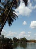 Кокосовые пальмы на банке озера Стоковые Фото