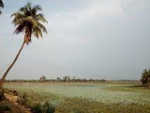 Кокосовые пальмы на банке озера Стоковое Изображение
