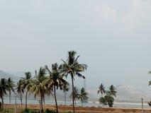 Кокосовые пальмы на банке реки Стоковые Фото