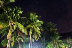 Кокосовые пальмы на ноче Стоковая Фотография