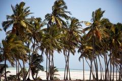 Кокосовые пальмы пляжа Занзибара Стоковая Фотография RF