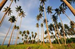 Кокосовые пальмы указывая до неба Стоковые Фотографии RF