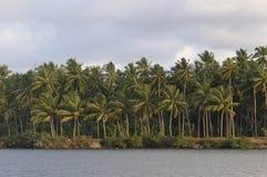 Кокосовые пальмы стоковые фотографии rf