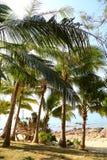 Кокосовые пальмы Стоковое Изображение RF