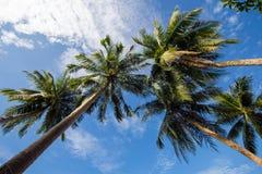 Кокосовые пальмы Стоковое фото RF