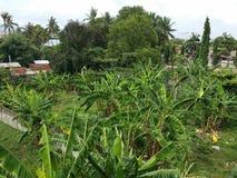 Кокосовые пальмы стоковое фото