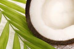 кокосы ванны Стоковая Фотография