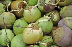 кокосы молодые Стоковые Изображения