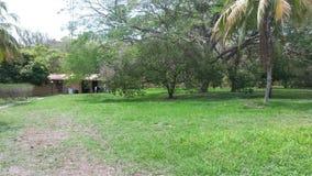 Кокосы дома Коста-Рика Стоковые Изображения RF