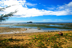 кокосы пляжа Стоковые Фотографии RF