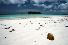 кокосы пляжа Стоковое Фото