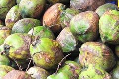 кокосы Стоковые Фотографии RF