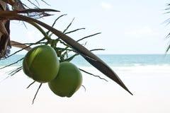 кокосы Стоковое фото RF