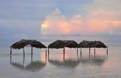 Кокосы Cayo в Кубе Стоковое Фото