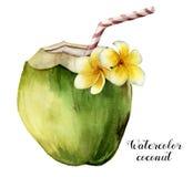 Кокос акварели с цветками plumeria Рука покрасила экзотическое питье при striped трубка и флористическое оформление изолированные Стоковые Фото