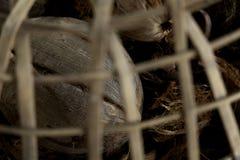 Кокос в клетке It' большая часть s стоковые фотографии rf