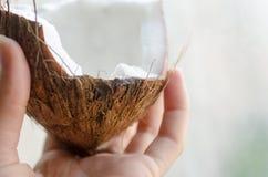 Кокос в руке Стоковые Фото