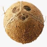 Кокос изолированный над белизной Стоковые Фотографии RF