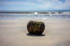 Кокос лежа на пляже песка с предпосылкой воды океана каникула принципиальной схемы тропическая стоковое фото