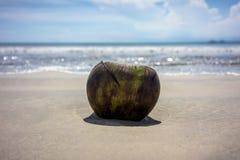 Кокос лежа на пляже песка с предпосылкой воды океана каникула принципиальной схемы тропическая стоковые фото