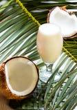 Кокос, молоко на разрешении пальмы, белой предпосылке Стоковое Изображение RF