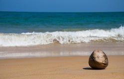 Кокос на красивом пляже стоковое изображение