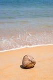 Кокос на красивом пляже стоковые фотографии rf