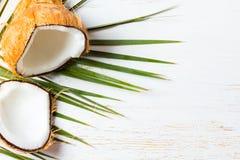 Кокос на разрешении пальмы, белой предпосылке Взгляд сверху Стоковые Фото