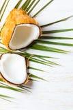 Кокос на разрешении пальмы, белой предпосылке Взгляд сверху Стоковая Фотография