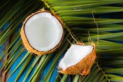 Кокос на разрешении пальмы Стоковые Изображения