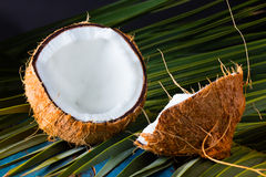 Кокос на разрешении пальмы Стоковые Фотографии RF