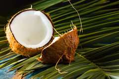 Кокос на разрешении пальмы Стоковая Фотография RF