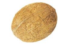 кокос одно Стоковое Изображение