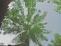 Кокос отражения Стоковая Фотография RF