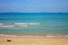 кокос пляжа солнечный Стоковое Фото