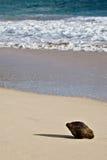 кокос пляжа уединённый стоковое фото rf