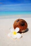 кокос пляжа Стоковые Фото