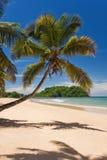 кокос пляжа Стоковое Изображение RF