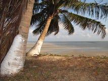 кокос пляжа Стоковая Фотография