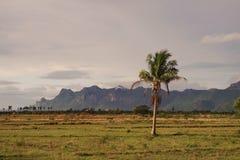 Кокос; Поле земли страны Стоковое фото RF