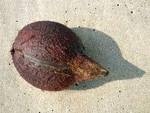 кокос пляжа стоковое изображение