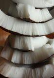 кокос соединяет пирамидку Стоковая Фотография RF