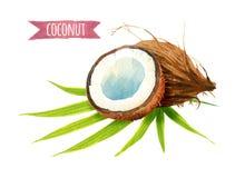 Кокос с листьями, иллюстрация акварели с путем клиппирования Стоковые Изображения RF