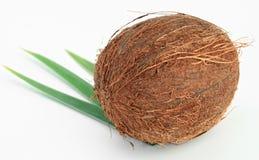 кокос Стоковые Изображения