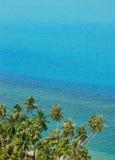 кокос Стоковое Фото